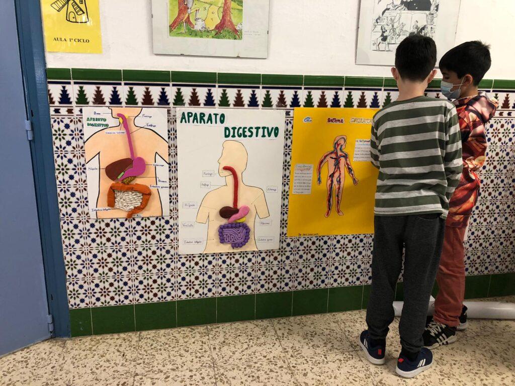 primeros auxilios y cuerpo humano en primaria 2
